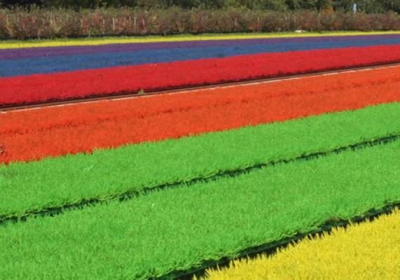 Fleurs et plantes d 39 alsace jardiland flor al center k geispolsheim - Cadre vegetal jardiland ...