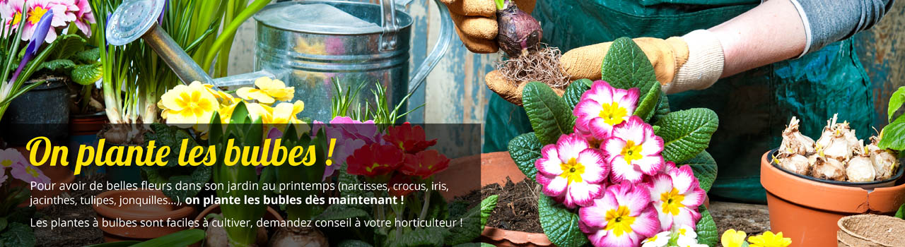 planter-bulbes-printemps