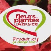 Fleurs et Plantes d'Alsace signe la météo sur France 3 Alsace