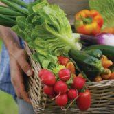 Replants de légumes