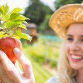 Plantez vos arbres fruitiers