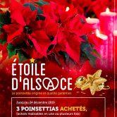 1 Poinsettia Étoile d'Alsace offert !*